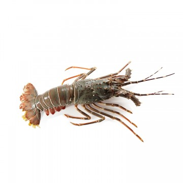 Bamboo Lobster ( 3 Pieces)